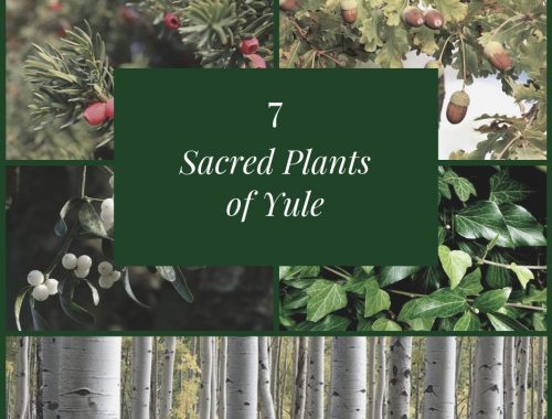 plants sacred to Yule Sabbat