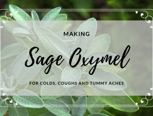 How to make Sage Oxymel